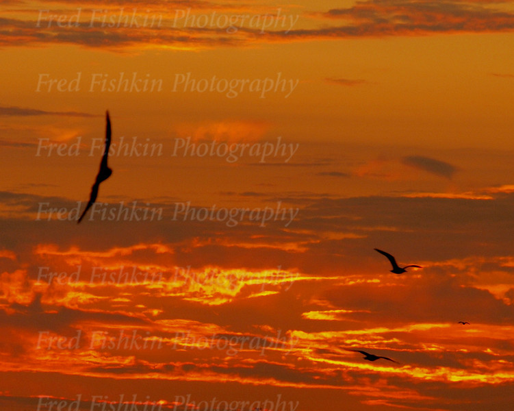gulls at sunset.jpg