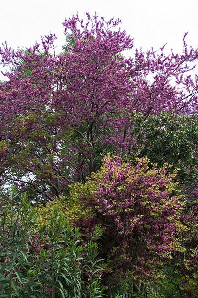 Spring in Athens 3.jpg