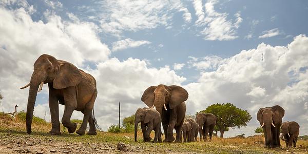 Elephants of Tarangerie