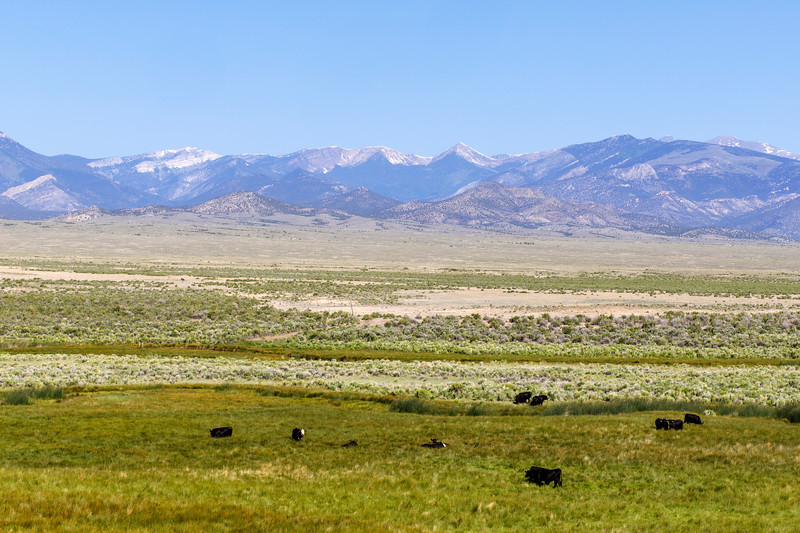 Cattle's Paradise