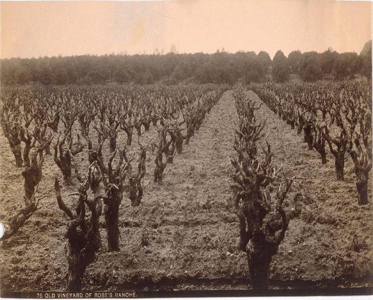 SanGabriel-VineyardOfRose'sRanche.jpg
