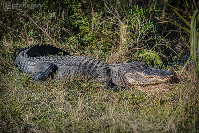 20131218_BIG_CYPRESS_NATIONAL_RESERVE (1 of 8)