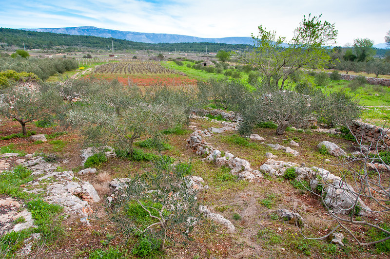 Wide shot of fields in Hvar, Croatia