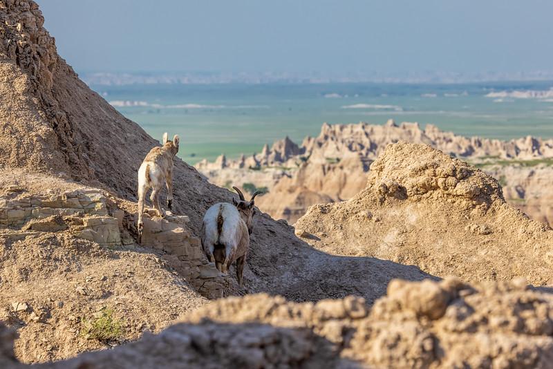 lamb following mama into the rocks-3045.jpg