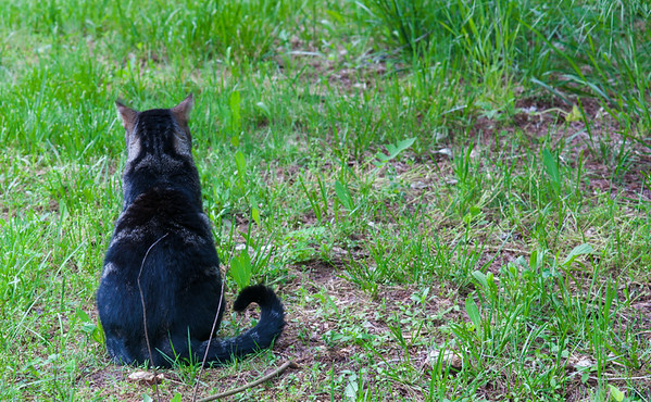 Cat on Guard -- dealing with open shade