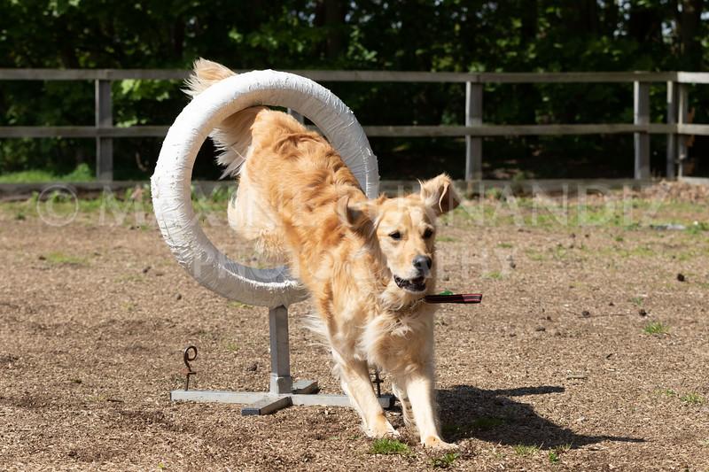 Dogs-8026.jpg