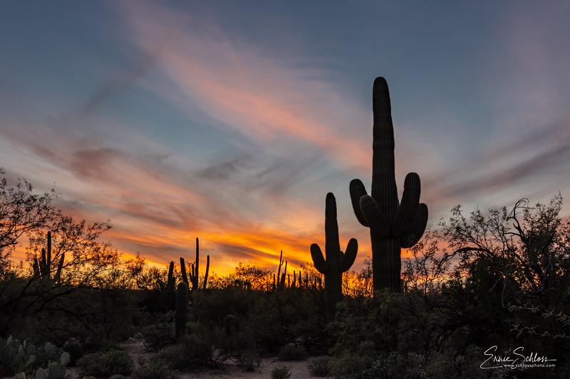 Sabino Sunset 11-17-2018a-.jpg