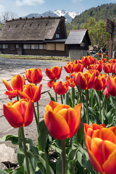 Ogimachi Folk Village, Hida Shirakawa-go (Shirakawa), Japan