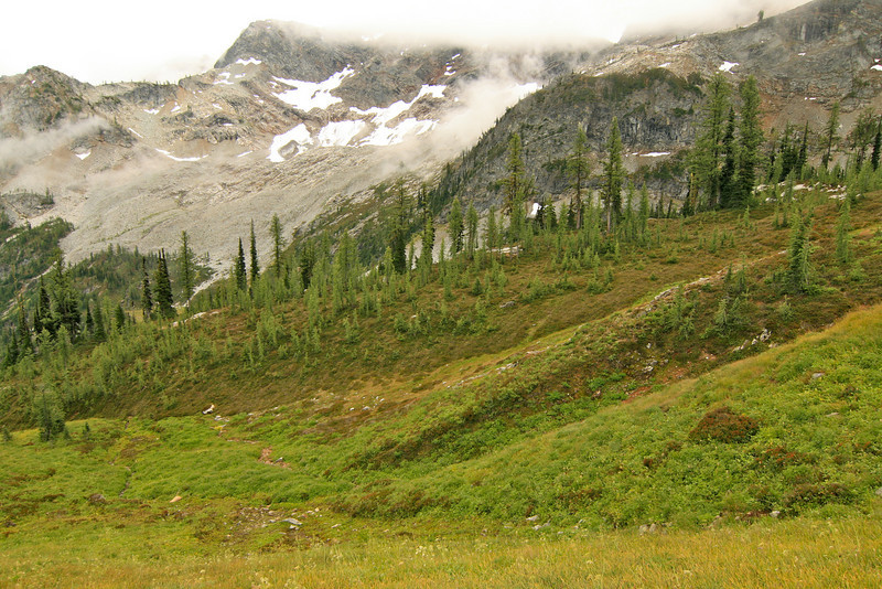 Larch near Maple Pass.