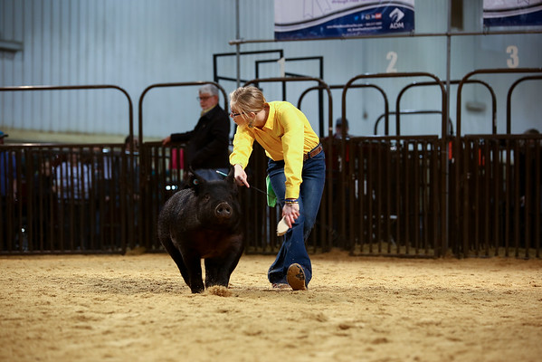 OYE Swine Showmanship 3/18/2019