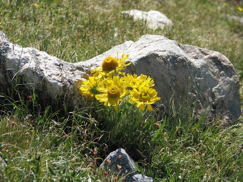Torreys Peak 7-13-06 205.jpg