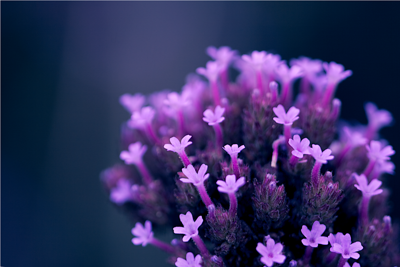 20110926_Flower_6.png