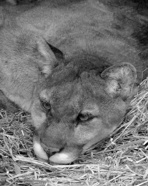 Columbus Zoo 006 N.jpg