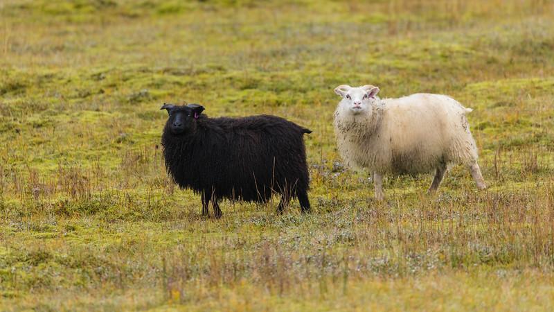 Iceland19_-1190.jpg