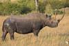 Black Rhino 2