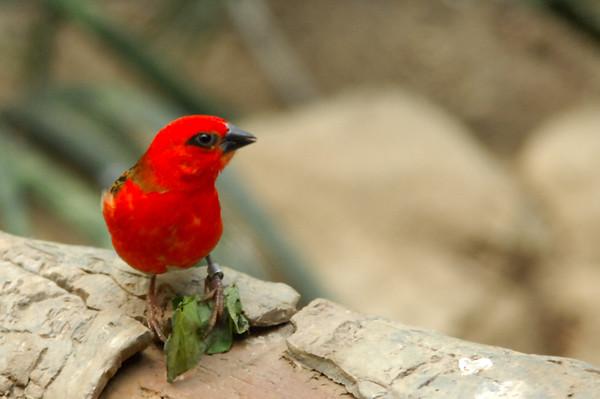 20110507 - Bronx Zoo