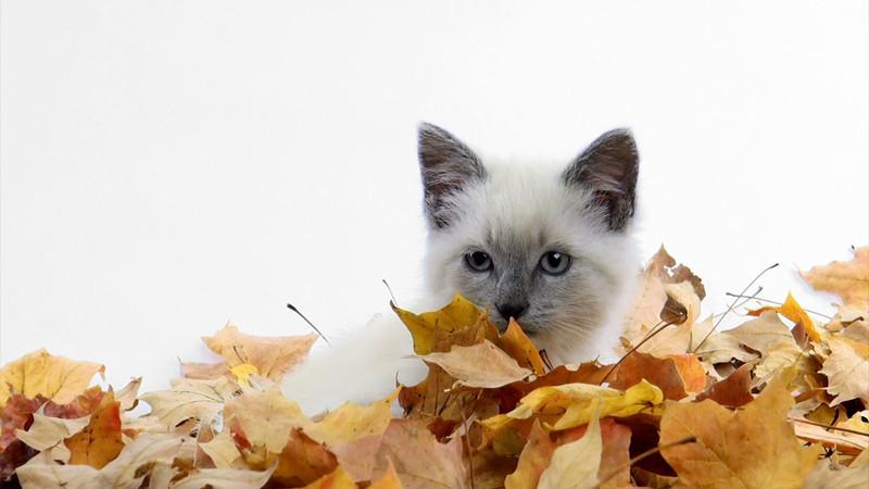 kitten_leaves_04.mov