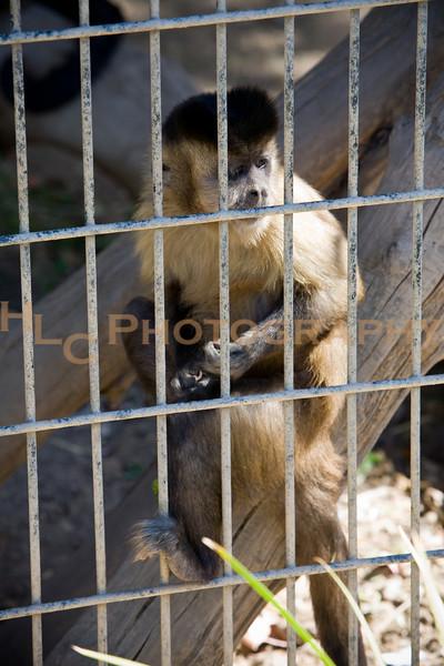 07/24/10 EATM-Moorpark College Zoo