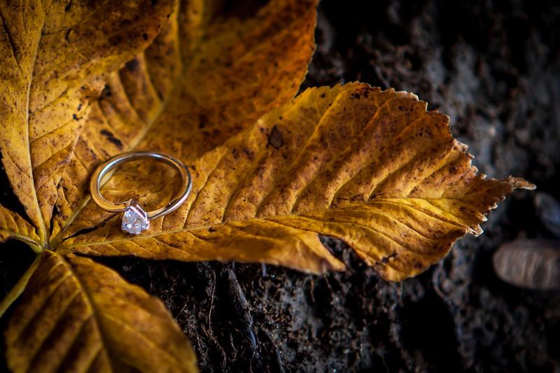 Swindell_Carpenter_Engagement-1113-058.jpg
