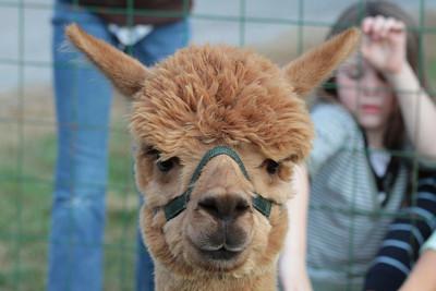 Norfolk Zoo 2012