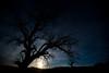 Desert moonrise.