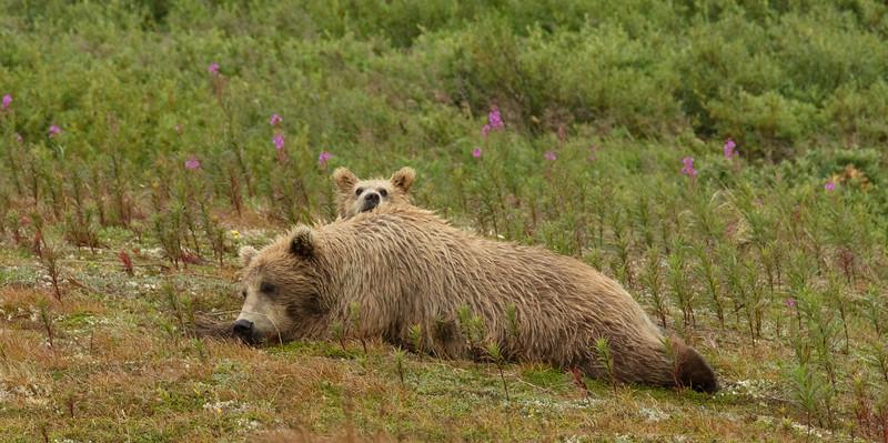 Brown_Bears_GAA_4025-Edit.jpg