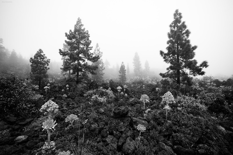 Teide_170526_6546.jpg