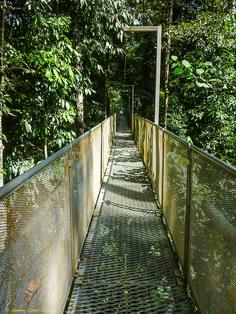 2013_01_12 Sungai Sedim Tree Top (canopy) Walk (Gunung Bintang hike)