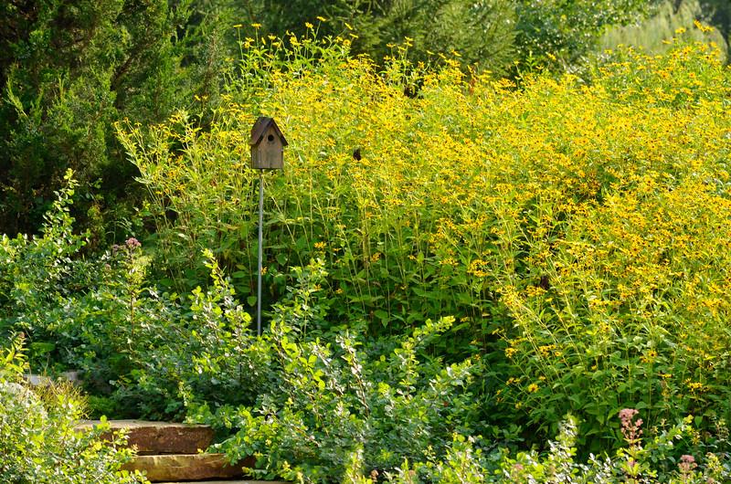 Bird house in yellow flowers.jpg