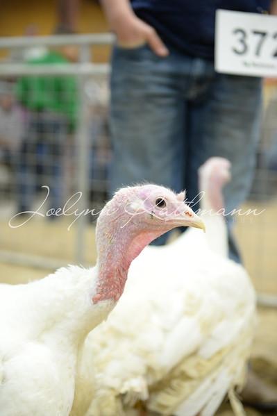 Turkey Show