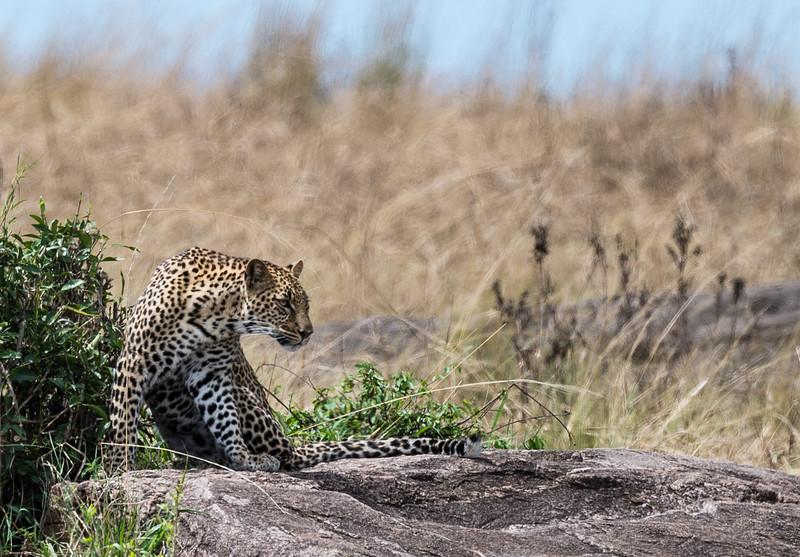 Kenya035.jpg
