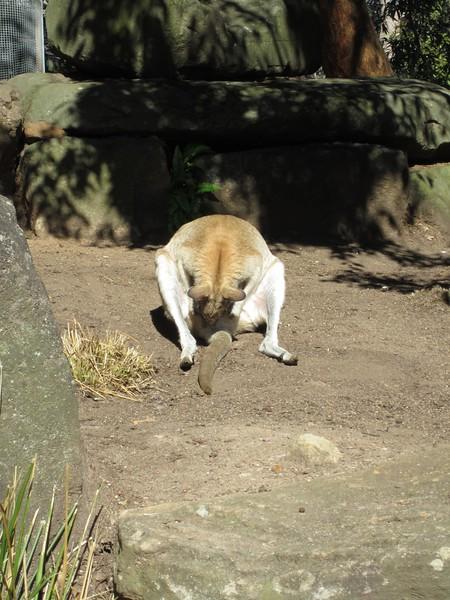 Sydney - Sydeny Zoo-59.JPG