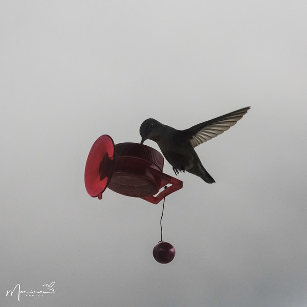 2021 - The Hummingbird Chronicles-0955_edit.jpg