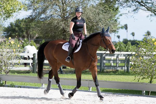 Seahorses in FL