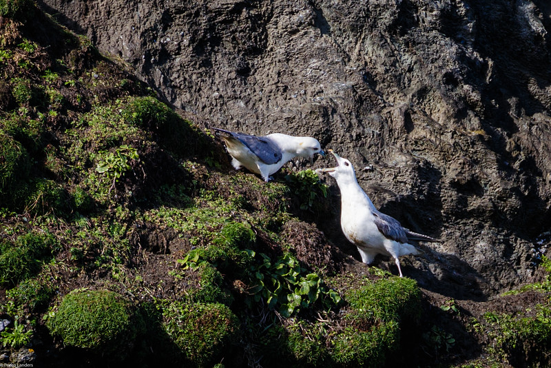 Fulmar Dispute