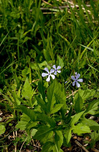 clip-015-flower-wdsm-04may09-4005.jpg