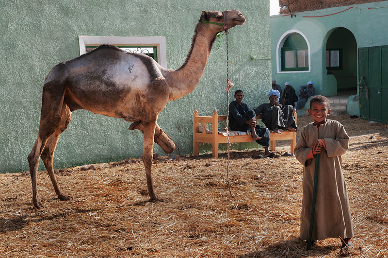 A young boy looking after his fathers camels at the Birquash Camel market.  Cairo, Egypt, 2010