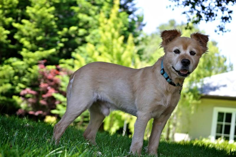 2011-06-19-0004-460 Van Buren-Leo.jpg