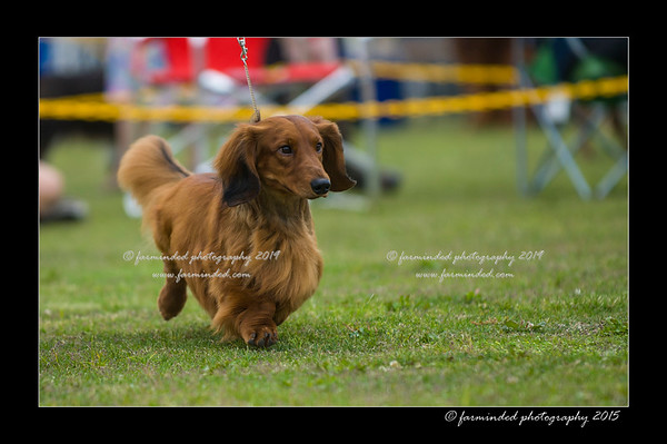 06/28/2015 - Alaska Kennel Club All Breed Dog Show
