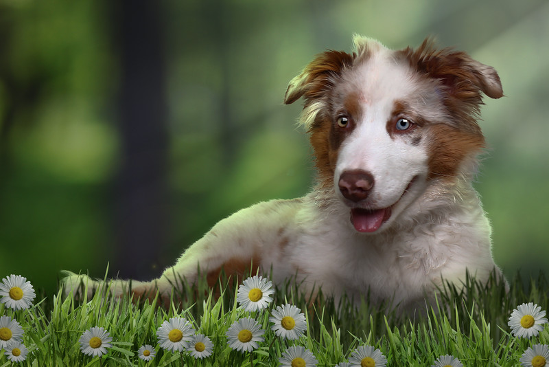 happydog-flowers.jpg