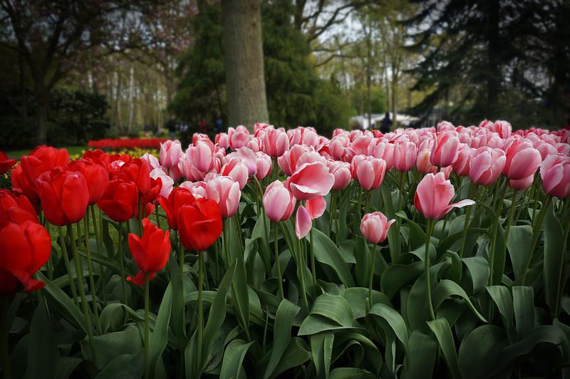 Keukenhof Gardens Lisse NL