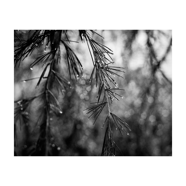 274_Raindrops_10x10.jpg