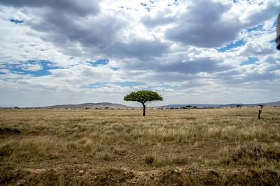 The Serengetti