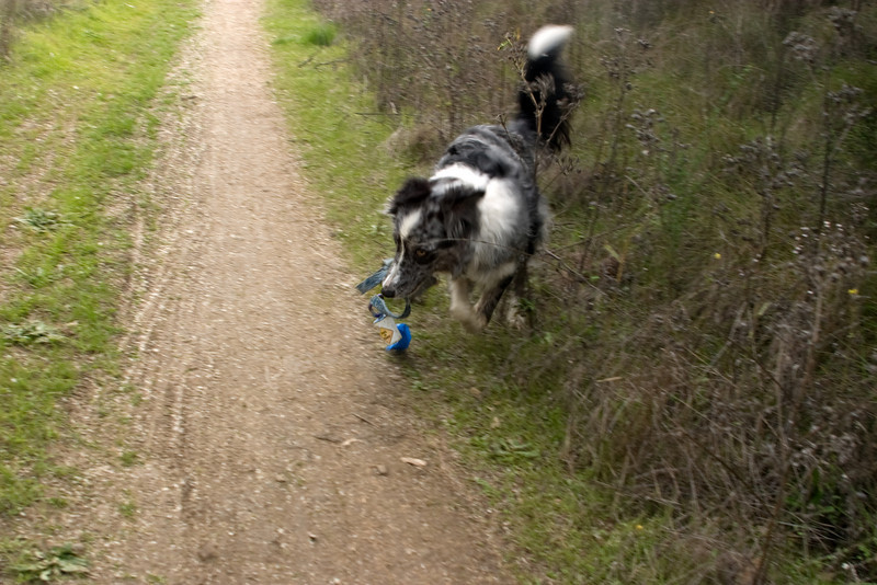 Boost loved running back and forth with her leashie.