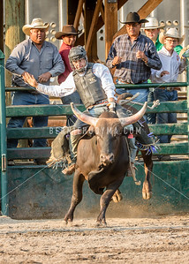 Bull Riding Seniors