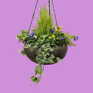 Vintage Water Bucket Hanging Basket