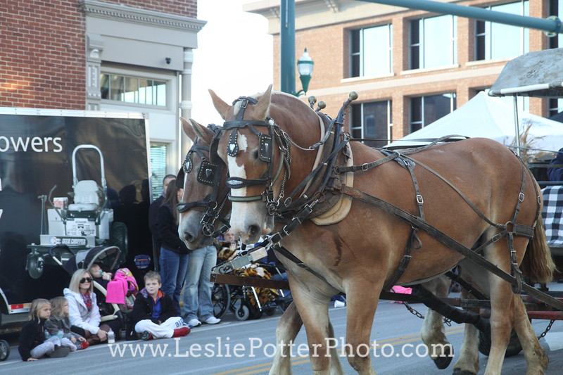 2014 Festival of the Horse Parade