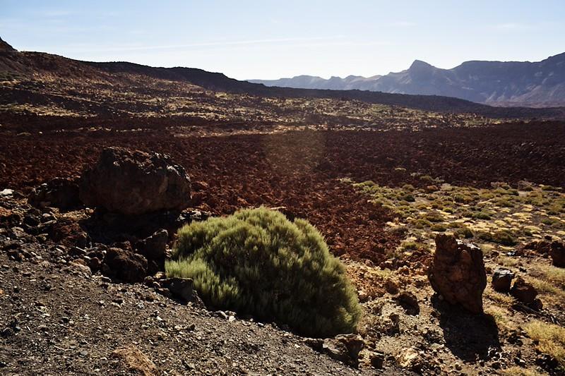 Lávová pole pod Teide