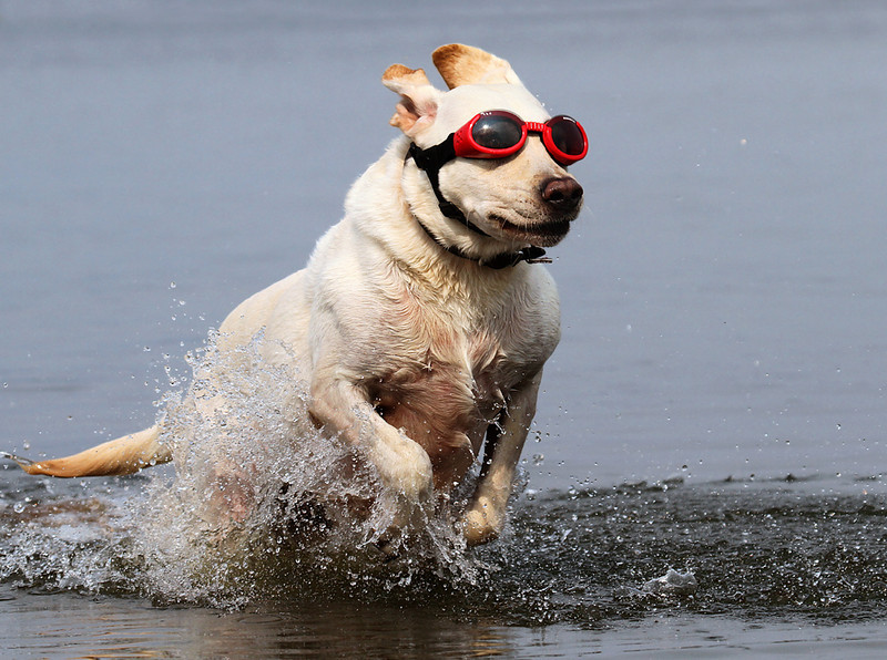 Doggles at the beach.jpg