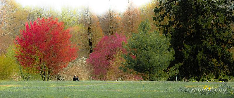 Cylburn Spring-aeamador-.jpg